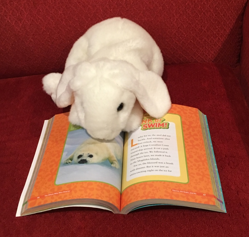 Marshmallow is pointing towards an adorable baby harp seal, the protagonist of only one of the many sweet stories in Animal Friendship! Collection, Amazing Stories of Animal Friends and the Humans Who Love Them by National Geographic Kids.