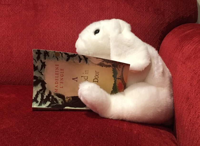 Marshmallow is reading A Wind in the Door by Madeleine L'Engle.