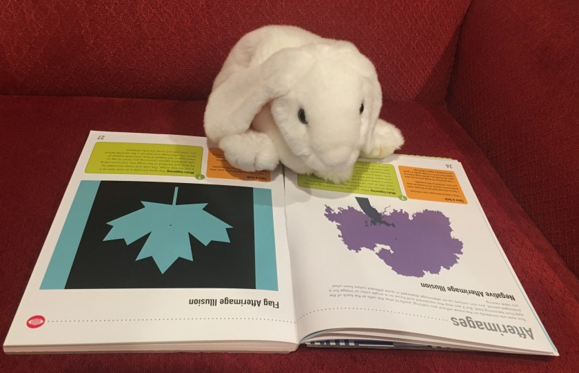 Marshmallow is reading up on afterimages, a special kind of physiological illusion.
