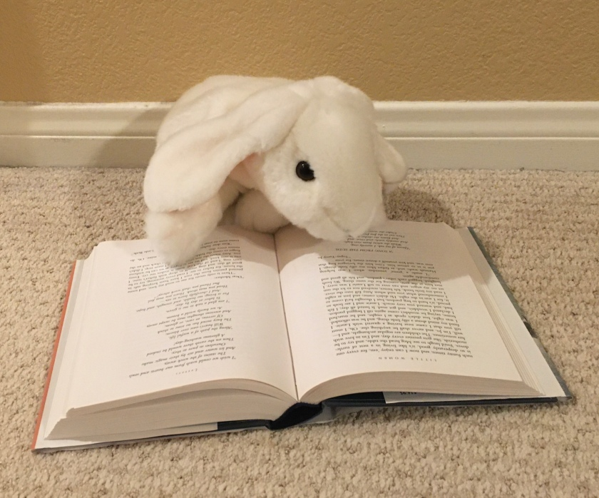 Marshmallow is reading  Little Women by Louisa May Alcott.