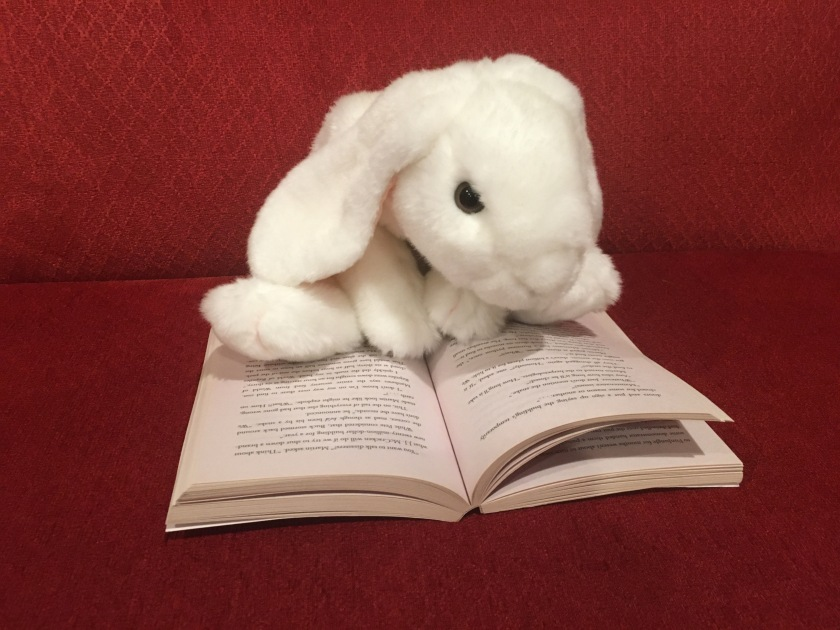 Marshmallow is reading Belly Up by Stuart Gibbs.