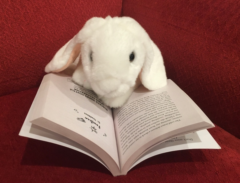 Marshmallow is reading The Unteachables by Gordon Korman.