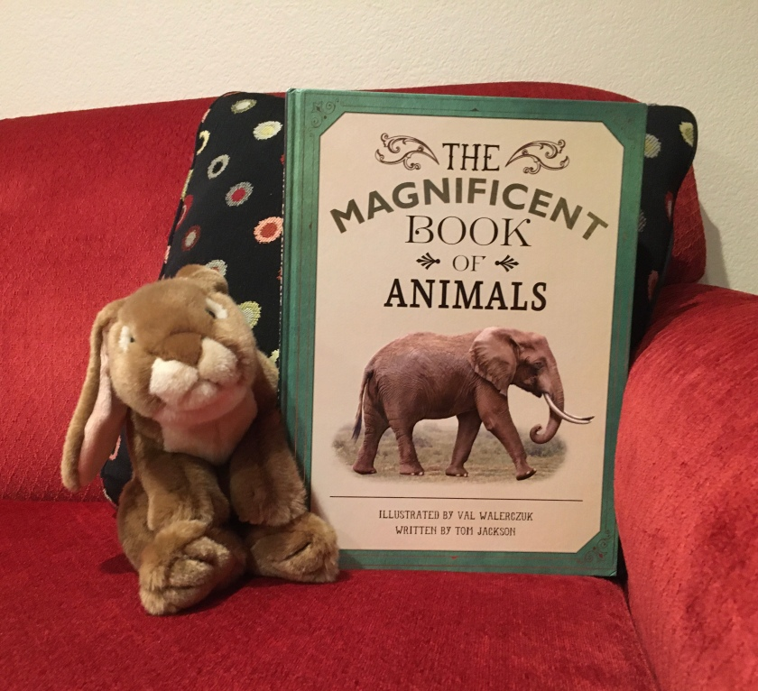 Caramel enjoys reading and looking at the truly magnificent illustrations in The Magnificent Book of Animals, illustrated by Val Walerczuk and written by Tom Jackson.