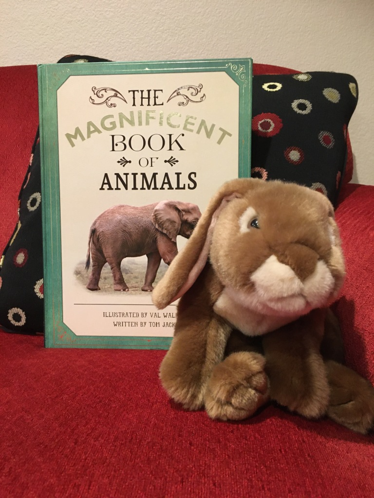 Caramel is showing us how big The Magnificent Book of Animals, illustrated by Val Walerczuk and written by Tom Jackson, is.