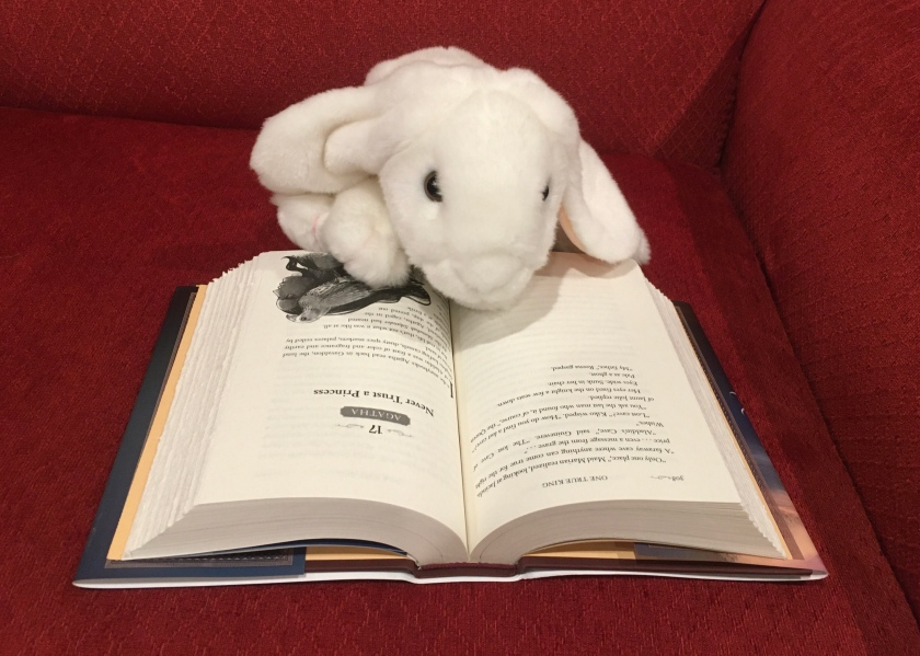 Marshmallow is reading One True King by Soman Chainani (Book 6 of The School for Good and Evil series).