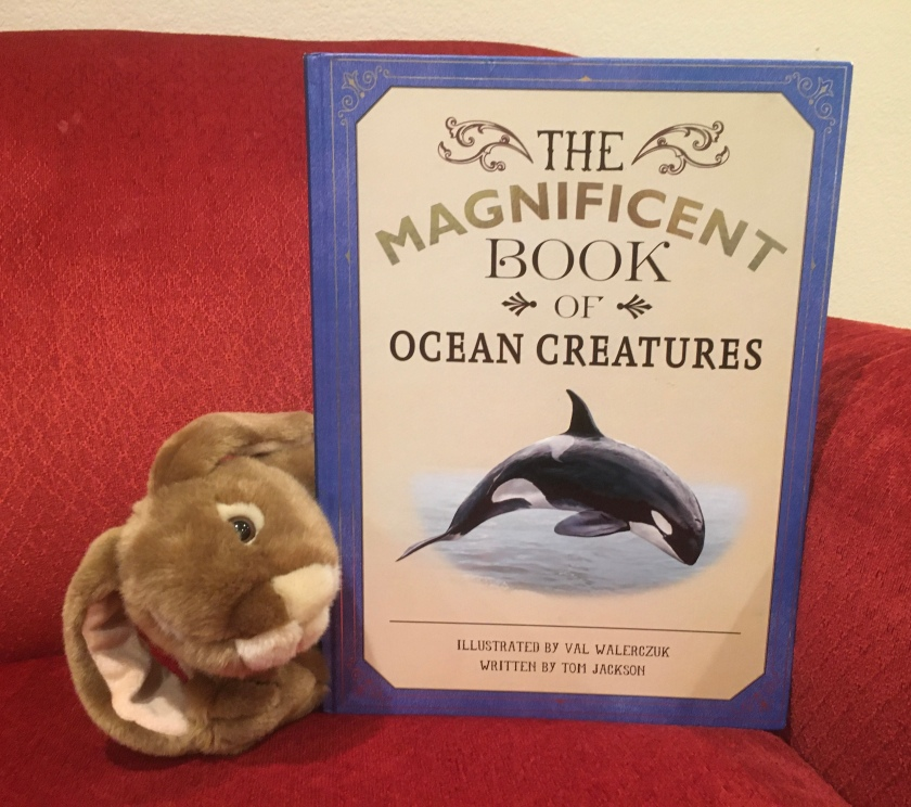 Caramel enjoyed reading The Magnificent Book of Ocean Creatures by Val Walerczuk and Tom Jackson, and is looking forward to many more reads where he will study once again the many amazing creatures of the world's oceans.