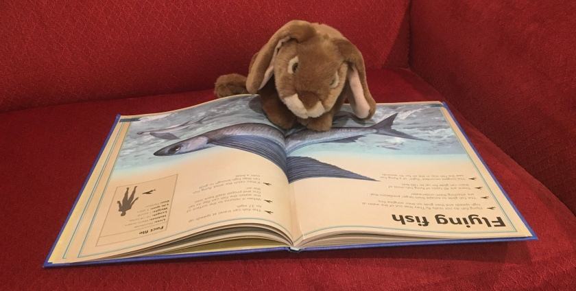 Caramel is reading his favorite pages (about flying fish) in The Magnificent Book of Ocean Creatures by Val Walerczuk and Tom Jackson.