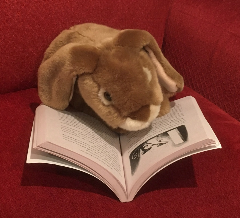Caramel is reading Ragweed by Avi and looking at the illustrations by Brian Floca.
