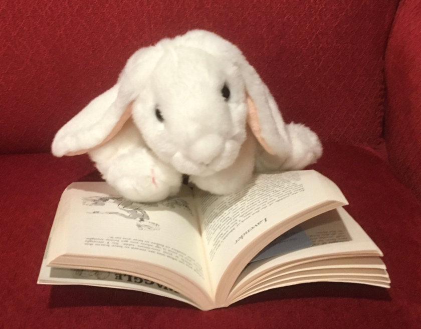 Marshmallow is reading Matilda by Roald Dahl and enjoying the funny illustrations by Quentin Blake.