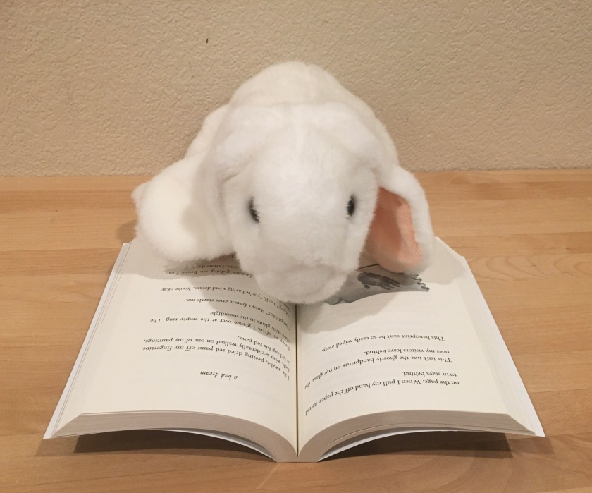 Marshmallow is reading The One And Only Ivan by Katherine Applegate.