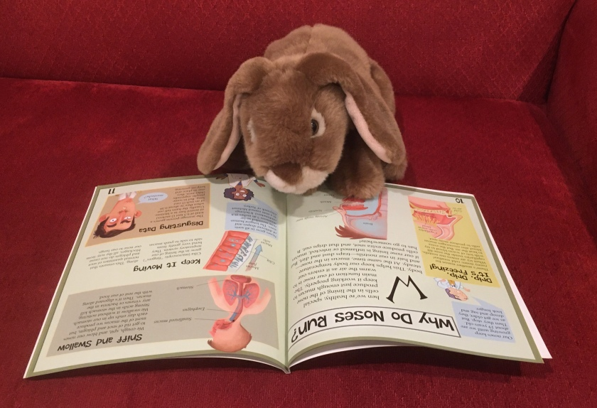 Caramel is reading about runny noses in The Science of Snot and Phlegm: The Slimy Truth about Breathing by Fiona MacDonald.