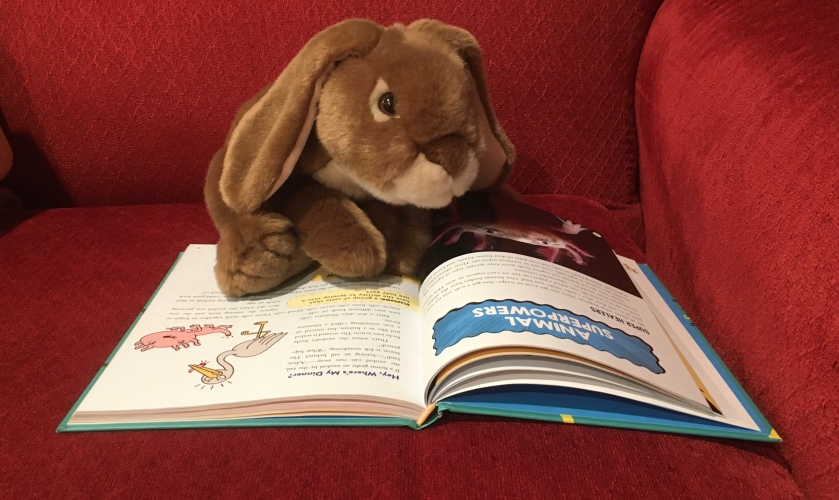 Caramel is reading the Brains On! book It's Alive: From Neurons and Narwhals to the Fungus Among Us, by Molly Bloom, Marc Sanchez, and Sanden Totten. Here he is checking out the section on Animal Superpowers.