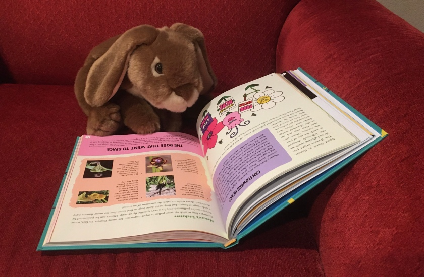 """Caramel is reading the Brains On! book It's Alive: From Neurons and Narwhals to the Fungus Among Us, by Molly Bloom, Marc Sanchez, and Sanden Totten. Here he is looking at the section on """"the rose that went to space""""."""