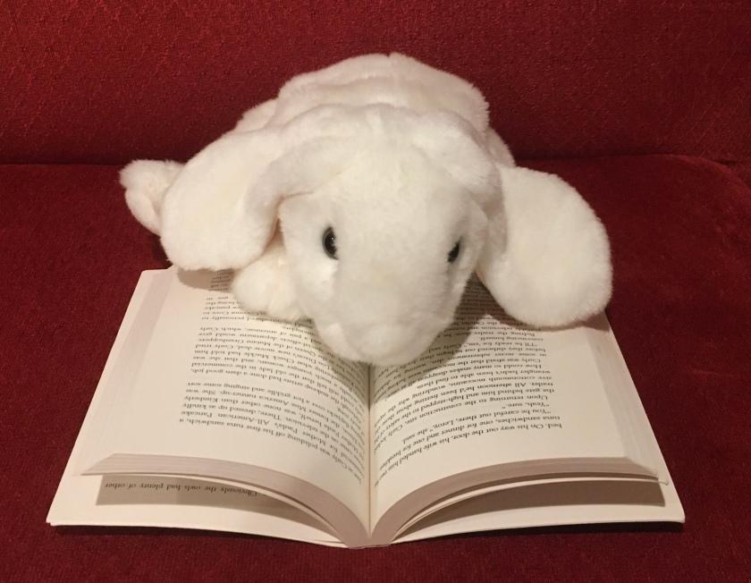 Marshmallow is reading Hoot by Carl Hiaasen.