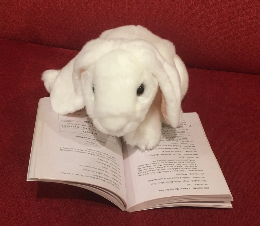 Marshmallow is reading Nothing But The Truth: a documentary novel by Avi.