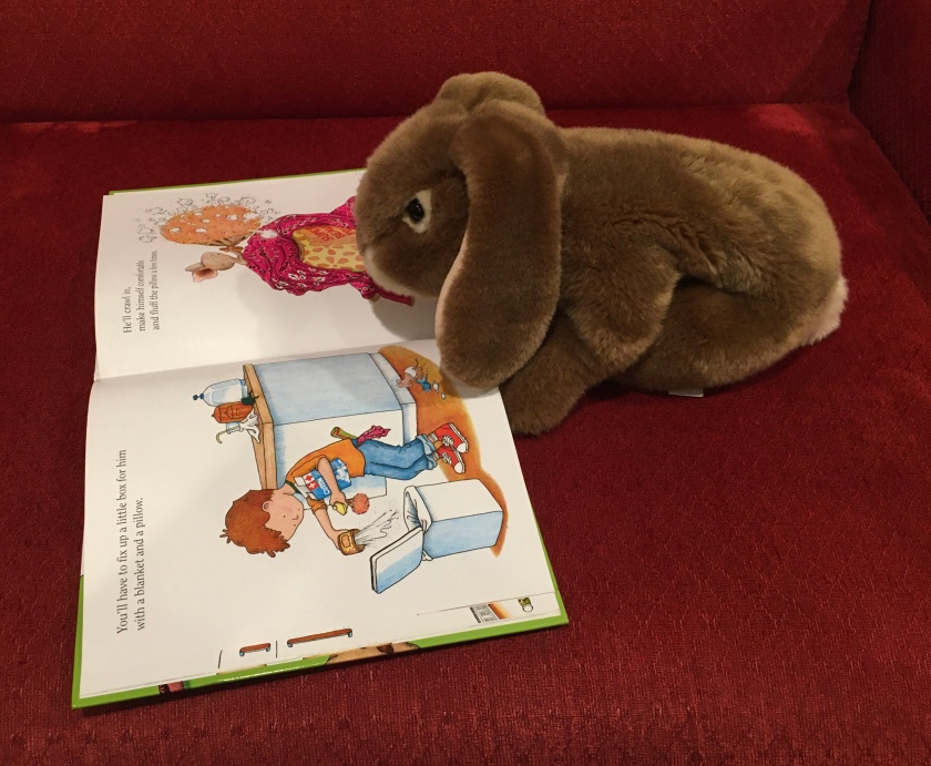 Caramel is reading  If You Give a Mouse a Cookie (1985), written by Laura Numeroff and illustrated by Felicia Bond.